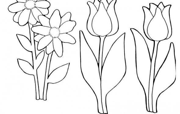 раскраски цветы Астра