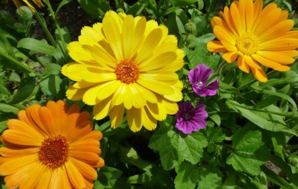 Какие цветы можно посадить под
