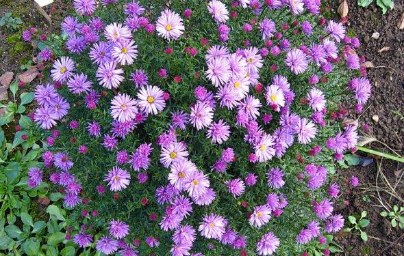 Мои цветы - осень