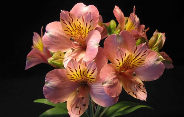 цветы виды ‹ ›