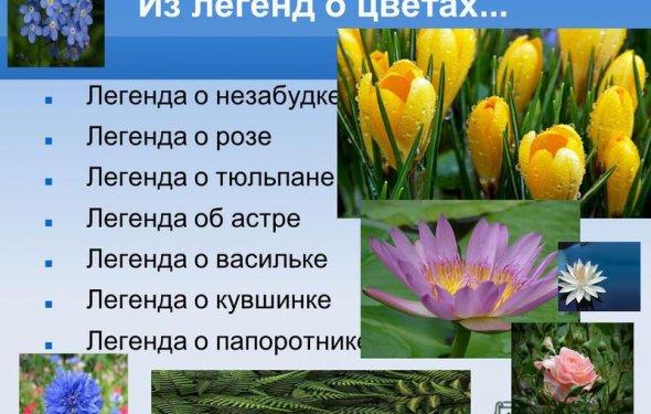 2 Из легенд о цветах