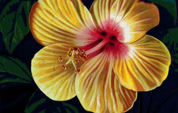 Яркие цветы, предпросмотр