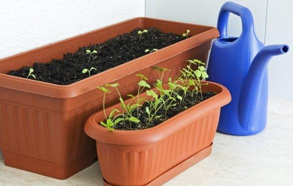 Высеивайте семена неглубоко